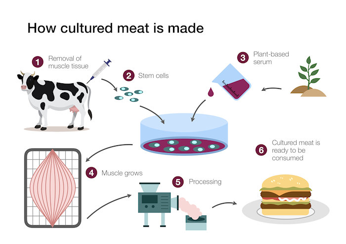 Futurist Speaker Thomas Frey Blog: How Cultured Meat is made and Why it is Here to Stay