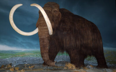 Introducing the New and Improved Woolly Mammoth… Well, Sort Of